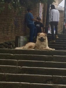 Dog in Cuenca